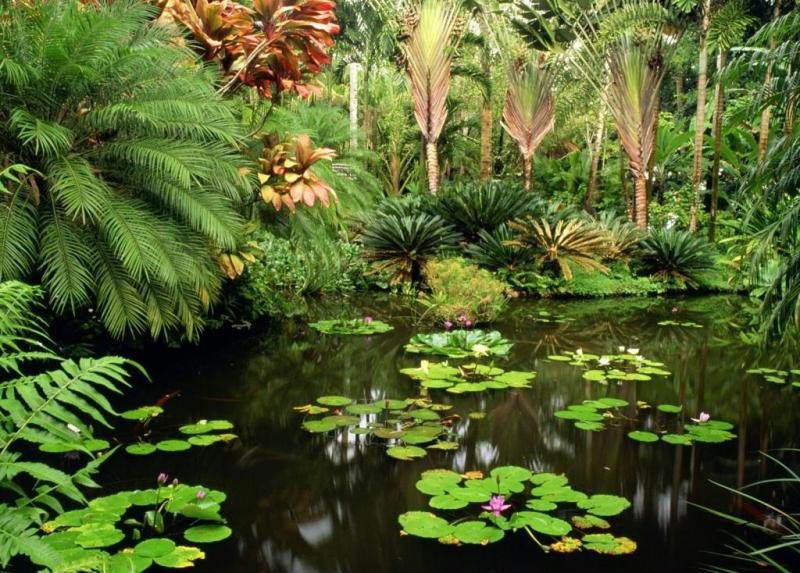 plante exotique de bassin